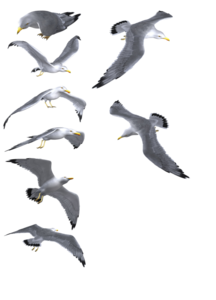 Gulls Background PNG PNG Clip art