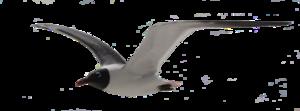 Gulls Download PNG Image PNG Clip art