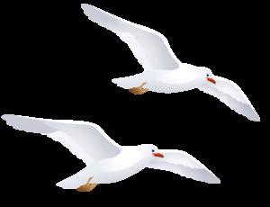 Gulls PNG Image PNG Clip art