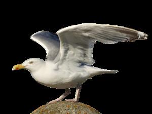 Gulls PNG Photo PNG Clip art