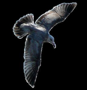 Gulls PNG Photos PNG Clip art