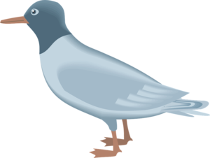 Gulls PNG Picture PNG Clip art