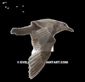 Gulls Transparent PNG PNG Clip art