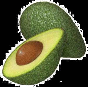 Half Avocado PNG Clipart PNG Clip art