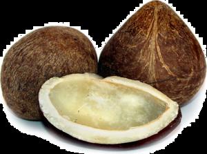 Half Coconut PNG Photos PNG Clip art