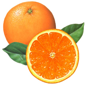 Half Orange PNG File PNG Clip art