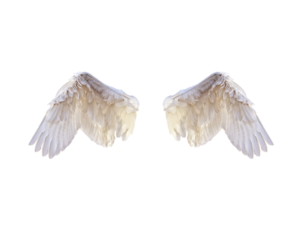 Half Wings PNG Photo PNG Clip art