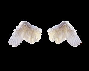 Half Wings PNG Photo PNG Clip art