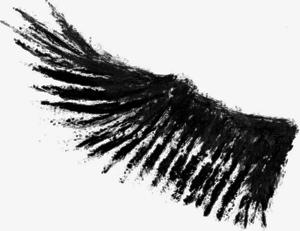 Half Wings PNG Photos PNG Clip art