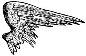 Half Wings PNG Picture PNG Clip art