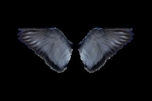 Half Wings Transparent PNG PNG Clip art