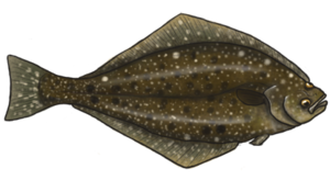 Halibut PNG Image PNG clipart