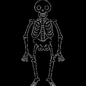 Halloween Skeleton Transparent PNG PNG Clip art