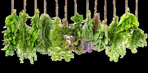 Herbs PNG HD PNG Clip art