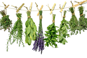 Herbs PNG Photo PNG Clip art