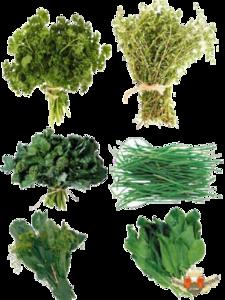 Herbs PNG Photos PNG Clip art