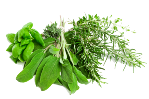 Herbs PNG Pic PNG Clip art