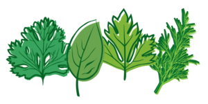 Herbs PNG Picture PNG Clip art