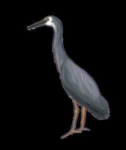 Heron Download PNG Image PNG Clip art