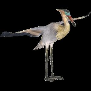Heron PNG Background Image PNG Clip art