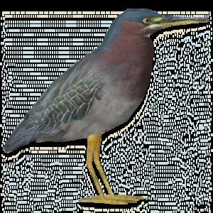 Heron PNG Free Download PNG Clip art