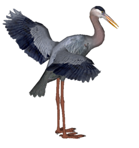 Heron PNG HD PNG Clip art