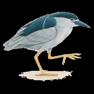 Heron PNG Image PNG Clip art