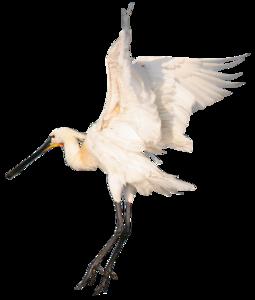 Heron PNG Photos PNG Clip art