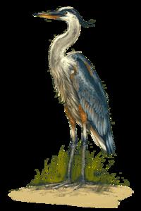 Heron PNG Pic PNG Clip art