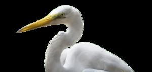 Heron PNG Transparent Image PNG Clip art