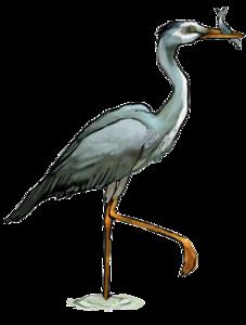 Heron PNG Transparent PNG Clip art
