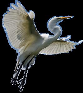 Heron Transparent Background PNG Clip art