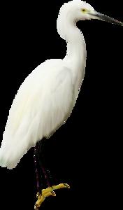 Heron Transparent PNG PNG Clip art