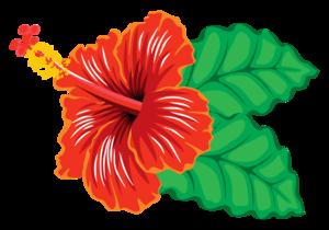 Hibiscus PNG Clipart PNG Clip art