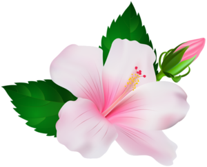 Hibiscus PNG Image PNG Clip art