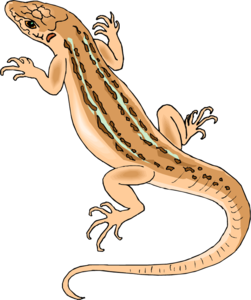 Horned Lizard PNG File PNG Clip art