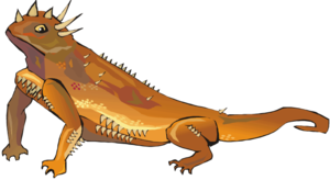 Horned Lizard PNG Transparent Picture PNG Clip art