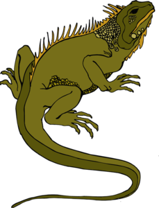 Horned Lizard PNG Transparent PNG Clip art