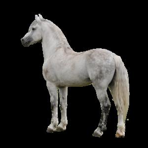 Horse PNG Clipart PNG Clip art