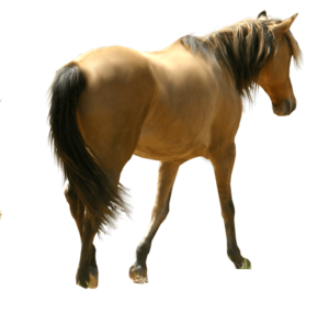 Horse PNG File PNG clipart