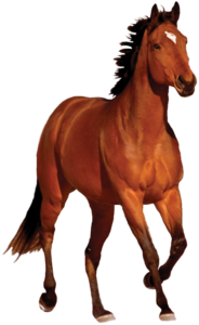 Horse PNG Transparent Image PNG clipart