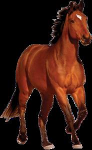 Horse PNG Transparent Image PNG Clip art