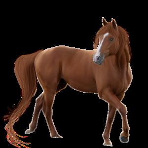 Horse Transparent Background PNG Clip art