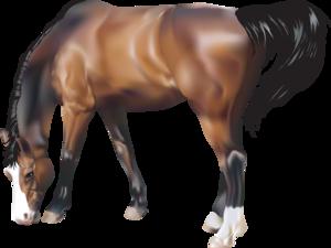 Horse Transparent PNG PNG Clip art