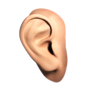Human Ear PNG File PNG icon