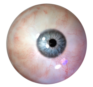 Human Eye PNG Clipart PNG icon