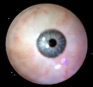 Human Eye PNG Clipart PNG Clip art