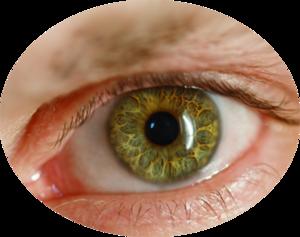 Human Eye PNG File PNG Clip art