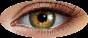 Human Eye PNG Image PNG Clip art