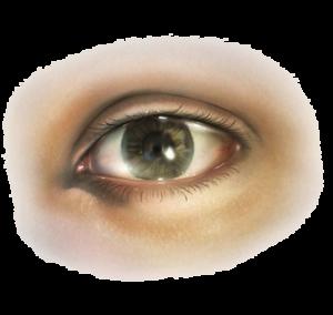 Human eye PNG image